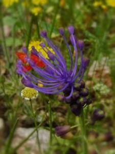 botanikos2